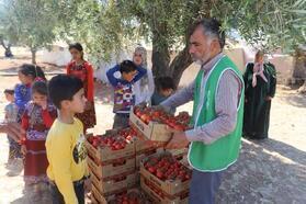 İHH Suriye'de 22 ton domates dağıttı