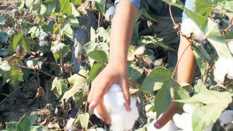 Çocuk işçilerin sayısı 160 milyona ulaştı