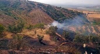 Yangında, 7 dönüm zeytin bahçesi zarar gördü