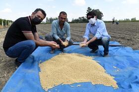 Tarsus Belediyesi'nin yerli tohum atağı soya fasulyesi ekimi ile devam ediyor