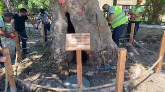 Keşan'da 166 yıllık çınar ağacı, koruma altına alındı