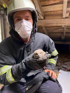 Çatıda mahsur kalan yavru baykuş kurtarıldı