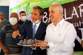 Yılın ilk siyah inciri, Mersin'de hasat edildi