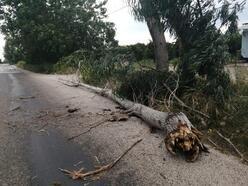 Kozan'da şiddetli rüzgar ağaç devirdi