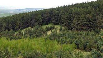 'Orman ekosisteminin direnci artırılmalı'