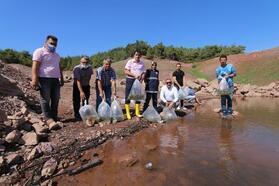 Baraj göletlerine 200 bin pullu sazan balığı bırakıldı