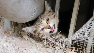 Pencerenin demir korkuluklarına sıkışan yavru kedi kurtarıldı