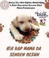 Datça'da, sokak hayvanları için mama bağışı kampanyası