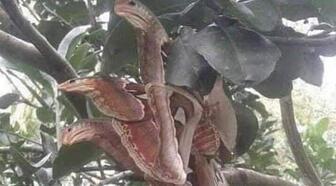 Sosyal medya bunu konuşuyor! 'Üç başlı yılan'