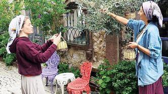 Burcu Biricik, Ayvalık'ta zeytin topladı