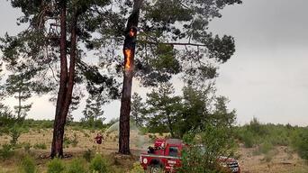 Muğla'da yıldırım düşmesi sonucu 13 günde 48 orman yangını çıktı