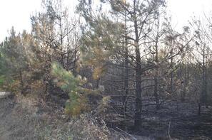 Malkara'da çıkan orman yangınında 800 ağaç zarar gördü