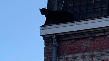 Görenleri ürküten olay! Çatı katına çıktı ve…