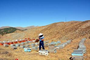 Terörden temizlenen Herekol Dağı, bal üretim merkezi oldu