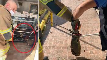 Son dakika haberi: Bursada 2 metrelik yılan iş yerine girdi