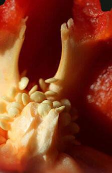 Kusursuz ve güzel bir cilt için tüketmeniz gereken 6 besin