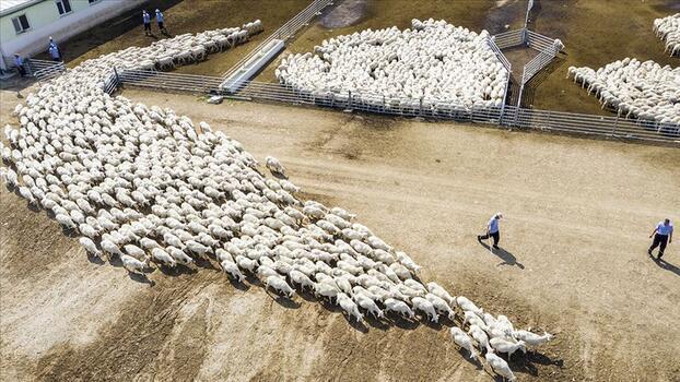 Hayvancılık işletmelerine iyi tarım uygulamalarına uyum sağlama zorunluluğu getirildi