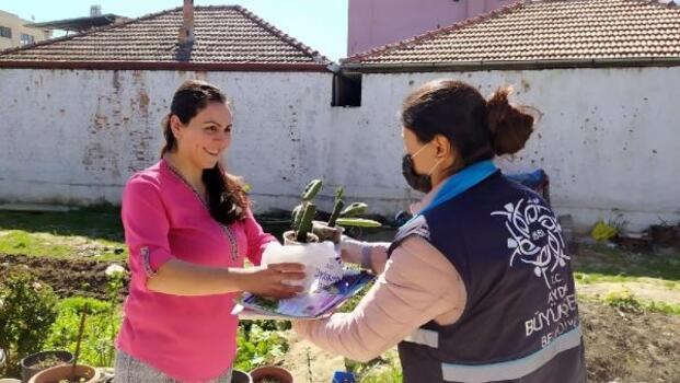 Aydın'da çiftçilere ejder meyvesi fidanı