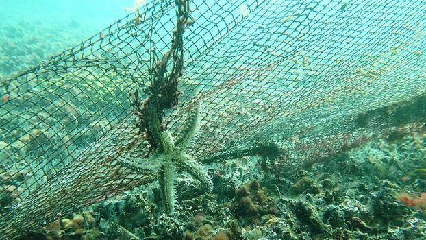 """Denizlerden geçen yıl 10 bin metrekare """"hayalet ağ"""" çıkarıldı"""