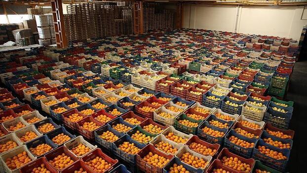 Türkiye'nin yaş meyve sebze ihracatı arttı
