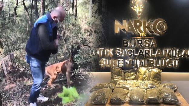 Bursa'da ormanlıktaki 12 kilo uyuşturucuyu 'Galya' buldu