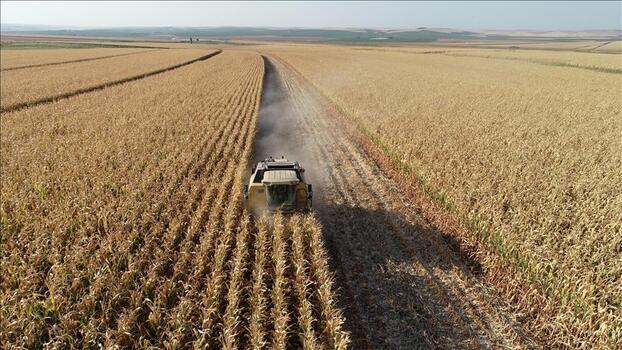 Tarım ÜFE martta aylık bazda arttı