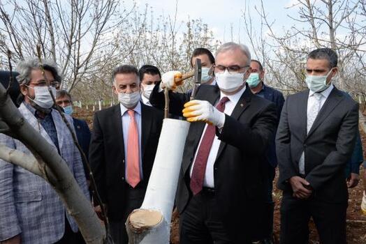 Diyarbakır'da, 10 bin ceviz ağacı aşılandı