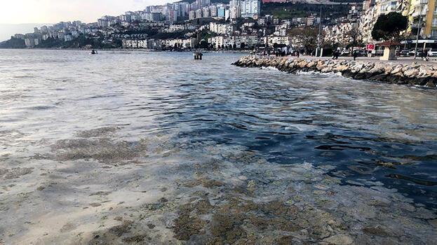 Gemlik sahili, plankton patlaması ile bembeyaz oldu