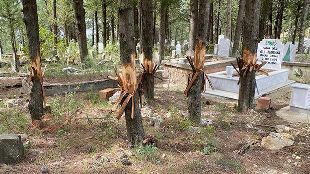 Mezarlıktaki ağaçlara zarar verildi