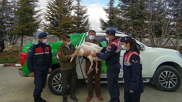 Mersin'de kanadı kırık pelikan tedaviye alındı