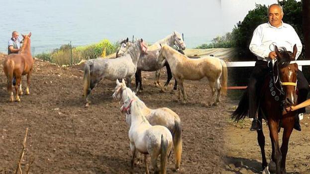 Kayıp atların akıbeti! Bakamayınca 'kaçtı' ihbarı yapmışlar