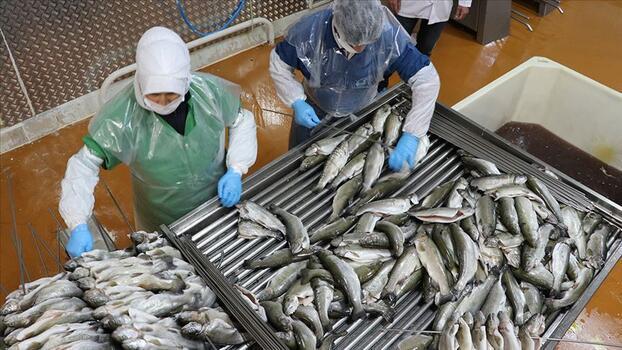 Su ürünleri ihracatı arttı