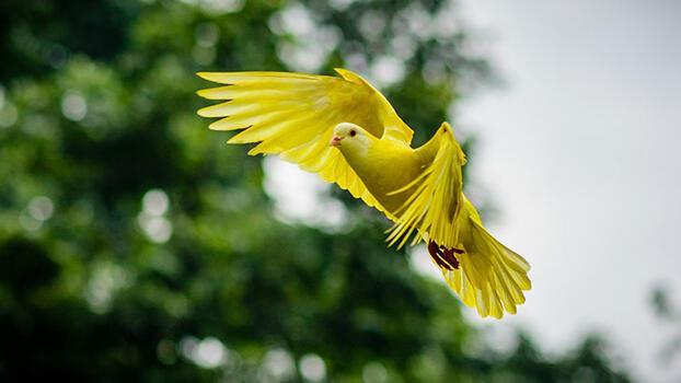 Kuşlar nasıl uçar?