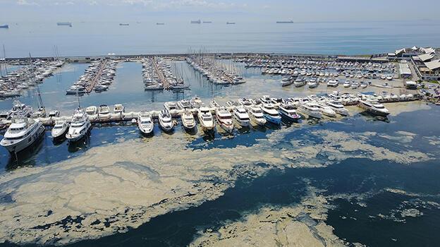 Pendik Marina'yı deniz salyaları kapladı