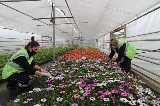 Eskişehir, kadınların eliyle çiçek açıyor