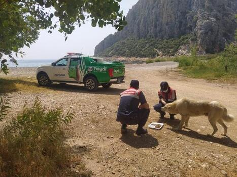 Jandarma sokak hayvanlarını besledi