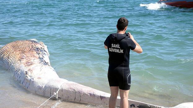Mersin'de kıyıya vurdu! Müzede sergilenecek