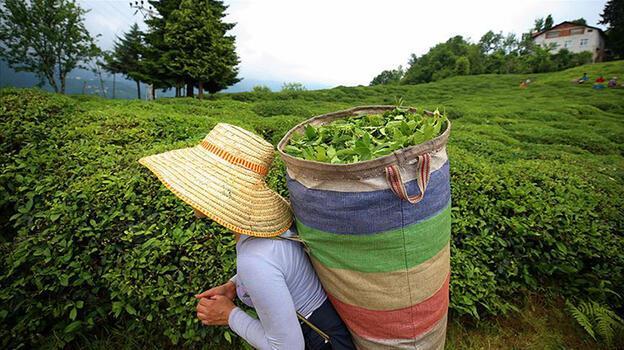 Son dakika: Cumhurbaşkanı Erdoğan 'çay alım' fiyatını açıkladı!