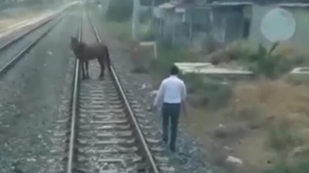Makinist treni durdurup, rayların üzerindeki atı güvenli bölgeye aldı