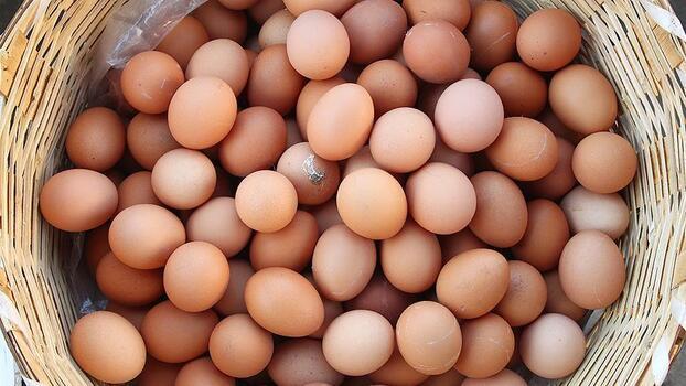 """Yumurta ihracatında """"damızlık"""" talebiyle artış yaşanıyor"""