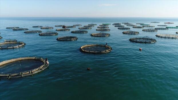 12 ülkeye 35,2 milyon dolarlık su ürünleri ihraç edildi