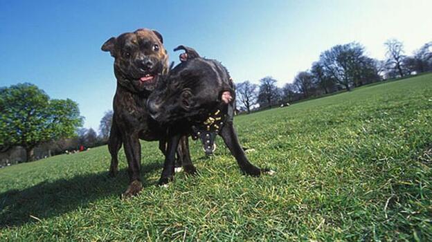 ABD'de, kuduz nedeniyle 100'den fazla ülkeden köpek ithali bir yıl süreyle yasaklandı
