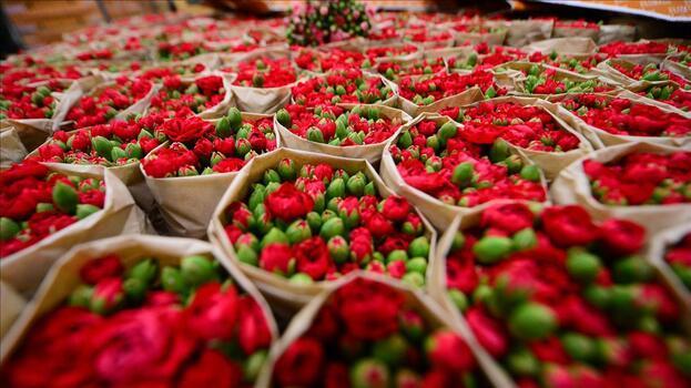 Kesme çiçek sektörü 500 milyon dolarlık ihracat hedefliyor