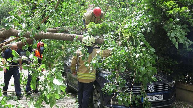 Ataşehir'de dut ağacı, otomobilin üzerine devrildi
