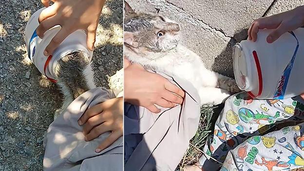 Bartın'da kafası yoğurt kabına sıkışan kediyi vatandaşlar kurtardı