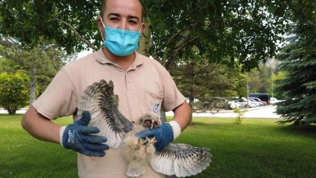Ağaçtan düşen yavru başkuş tedavi edildi