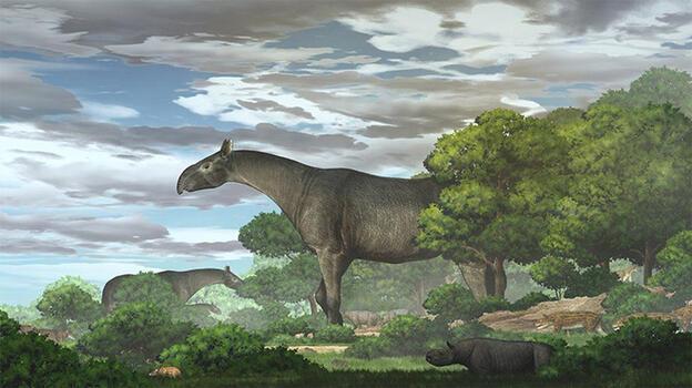 Zürafalardan daha uzun, nesli tükenmiş bir gergedan türü bulundu