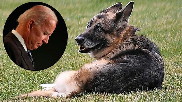 Biden, köpekleri 'Champ'ın öldüğünü duyurdu