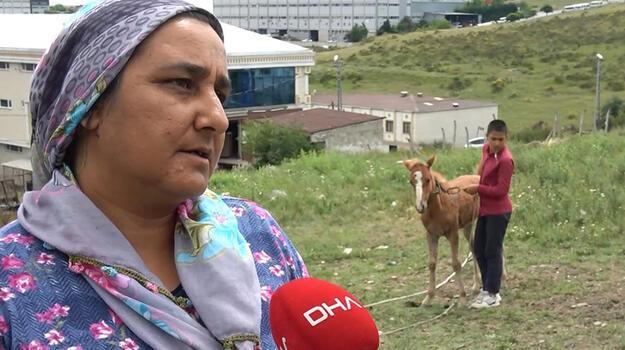 Atlarına kamyonet çarpan aileye 23 bin 467 liralık tebligat şoku