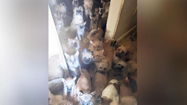 Evden çıkan kiracı arkasında 85 köpek ve 9 kedi bıraktı